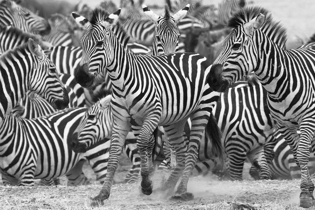 ReisekonzeptCCL - Wildlife 30