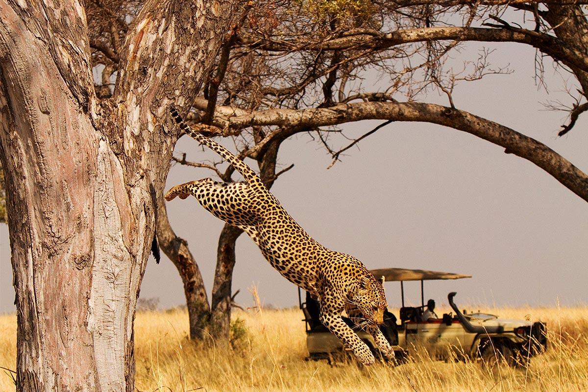 ReisekonzeptKer&Downey, Shinde, Leopard game drive, Botswana