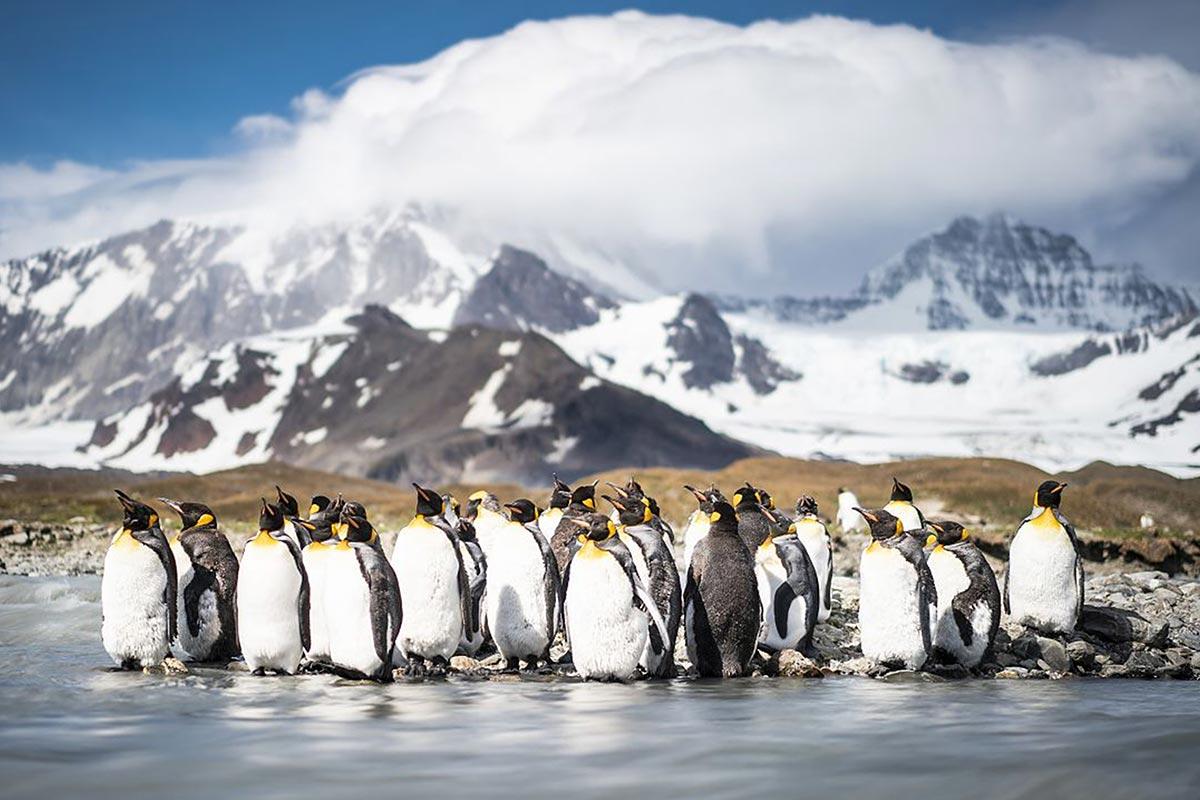 Reisekonzepthanseatic-nature-antarktis-fotografie-dietmar-denger-086,21437_webdownload_1280