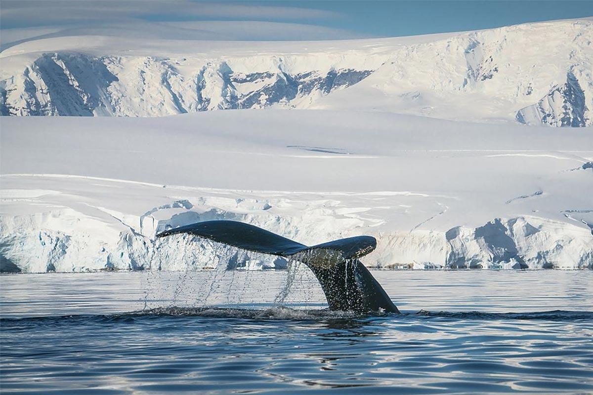 Reisekonzepthanseatic-nature-antarktis-fotografie-dietmar-denger-153,21434_webdownload_1280 (1)