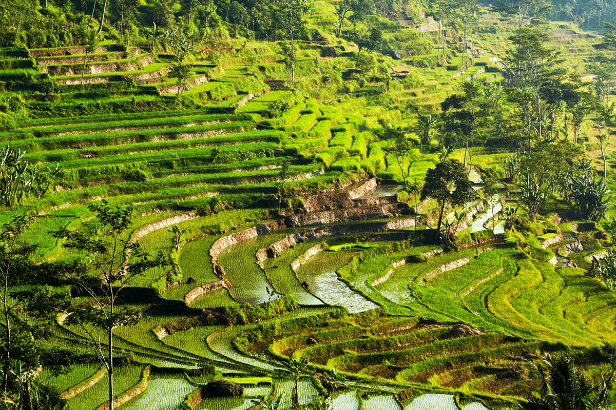 Amanjiwo, Indonesia - Ricefields Selegriyo_High Res_11231Reisekonzept